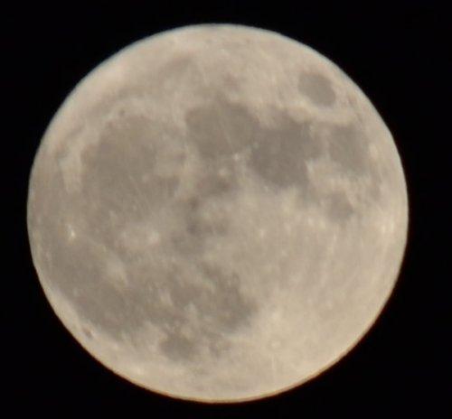 満月をきれいに撮影できました。今日の満月は46年ぶりの珍しい満月のようです