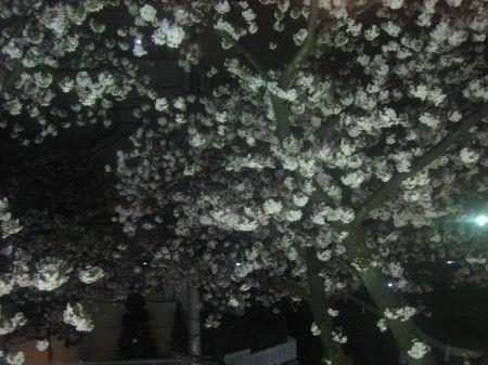 たまプラーザの三拍子 花見の宴会 窓から