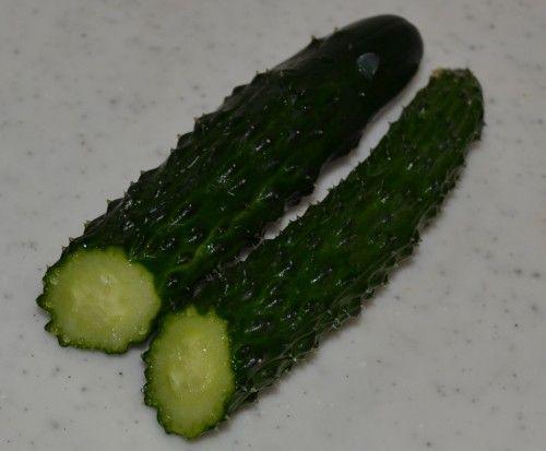 ベランダ菜園のプランターのキュウリ「味さんご」が沢山なってきました