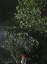 たまプラーザの三拍子の前の桜