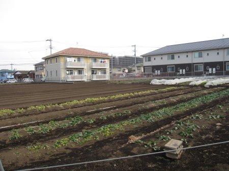長津田 農地