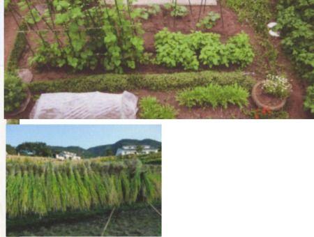 東京のマンションを売り払って、千葉に引っ越して家庭菜園、棚田の稲の収穫