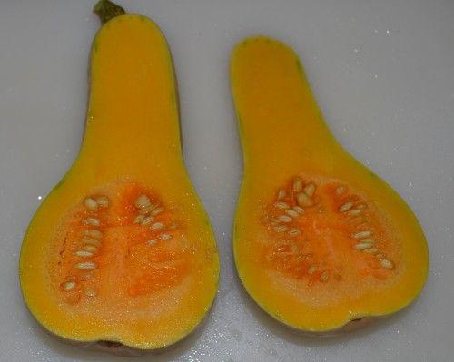 バターナッツかぼちゃの実を収穫