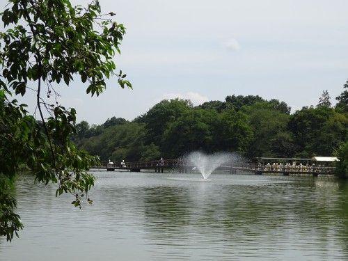 井の頭公園を散歩