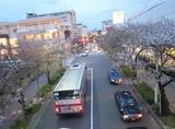たまプラーザの駅前の桜