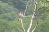 尾瀬ケ原の鳥