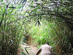 竹のトンネル 飛島 酒田