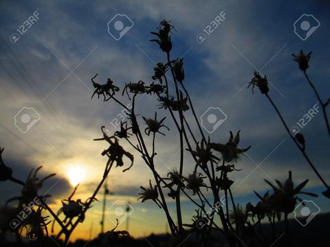 75164482-sunset-dry-grass-Stock-Photo