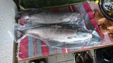 180615大漁祭 (5)