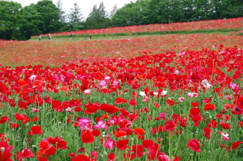 昭和記念公園201405-7