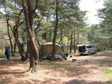 本栖湖キャンプ場サイト