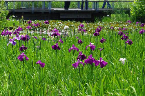 昭和記念公園水辺201006-9