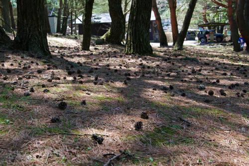 本栖湖キャンプ場201005-2