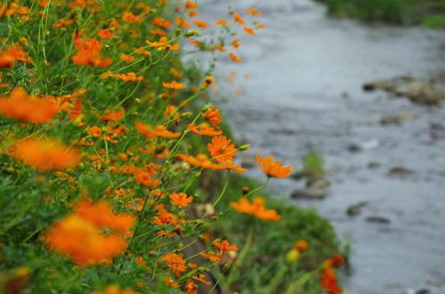 散歩道の秋201209-6