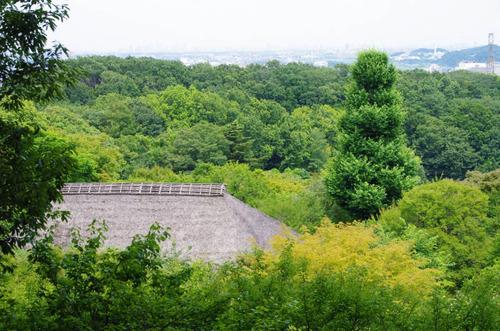 京王百草園201306-7