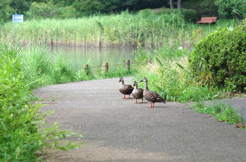 昭和記念公園201408-5
