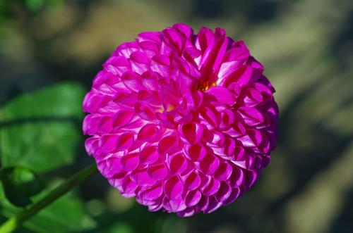神代植物公園201210-2