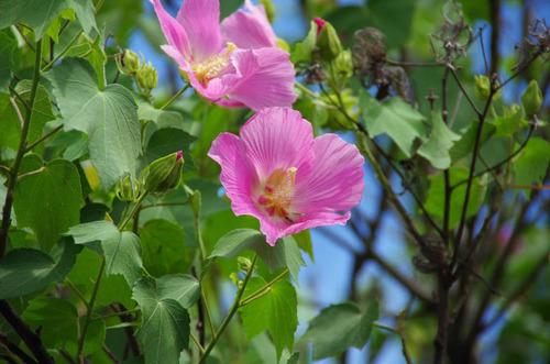 散歩道の8月の花-6