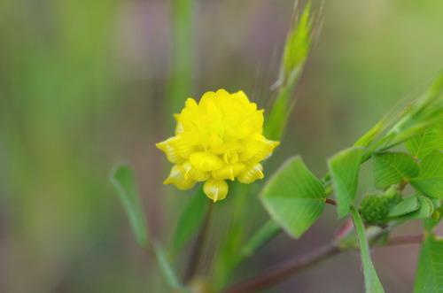 河川敷の花201106-5