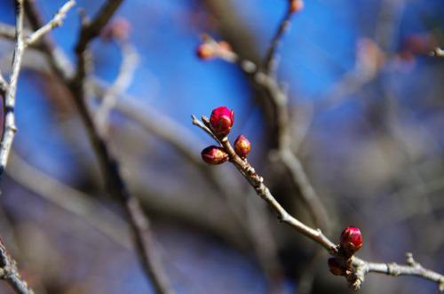 京王百草園201201-10