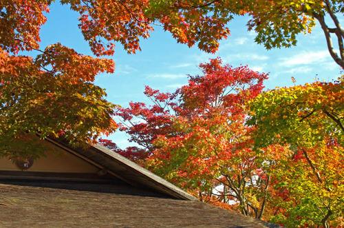 昭和記念公園201411-1