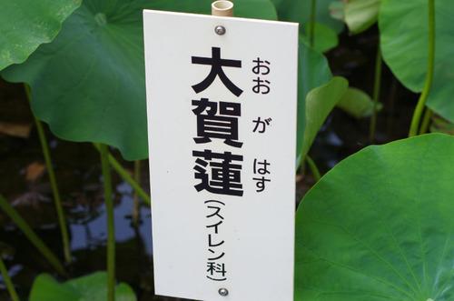高幡不動尊201108-5