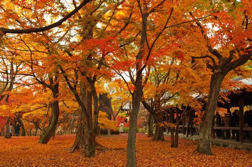 京都東福寺201211-12