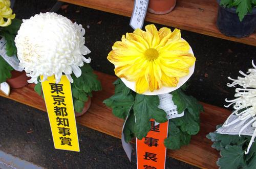 高幡不動201411-9