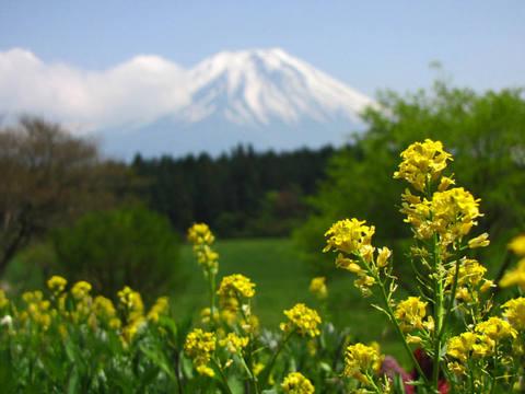 朝霧高原富士山-4