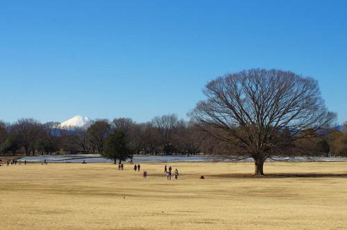 昭和記念公園201501-4