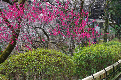 京王百草園201503-4