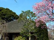 百草園梅祭090207-12