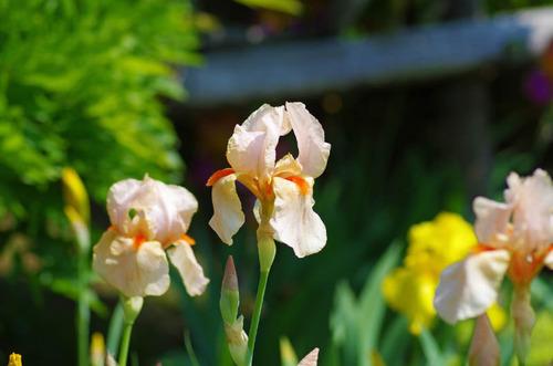 神代植物公園201305-10