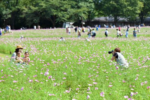 昭和記念公園201509-6