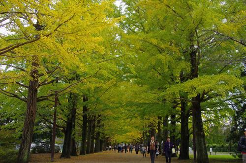 昭和記念公園201111-1
