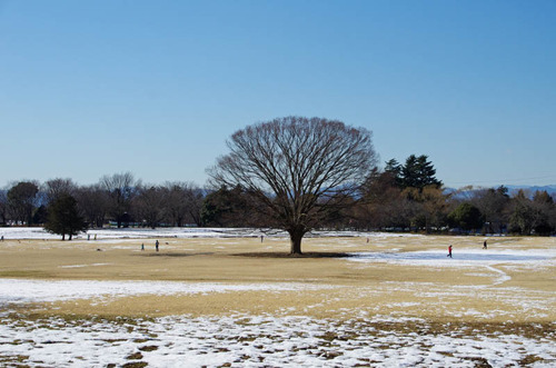昭和記念公園201301-4