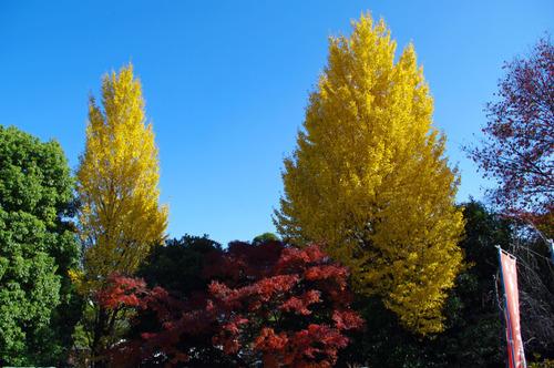 高幡不動尊201009-10