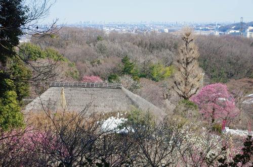 京王百草園201402-11