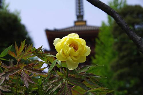 高幡不動尊201005-4