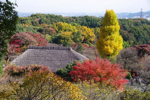 百草園紅葉201011-7