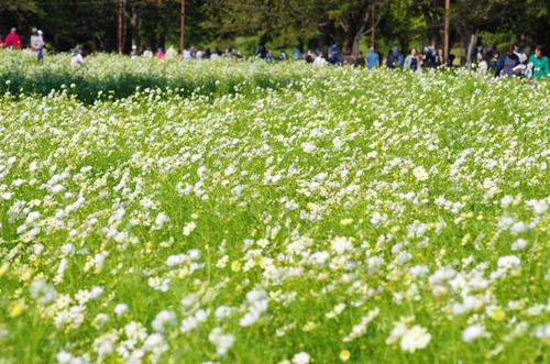 昭和記念公園201210-3