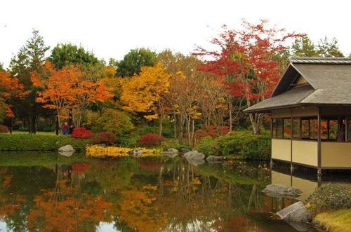 昭和記念公園紅葉201211-5