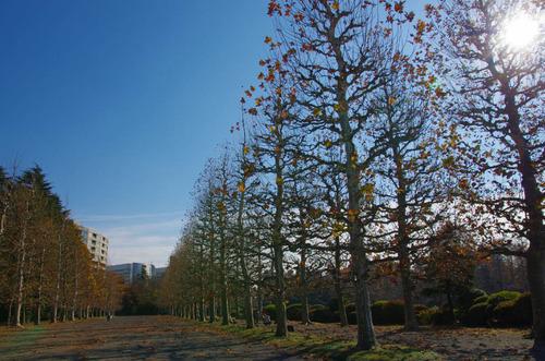 新宿御苑201312-7