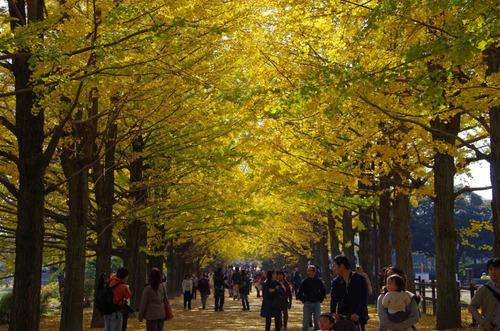 昭和記念公園201111-12