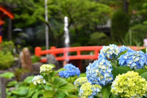 高幡不動尊201605-13