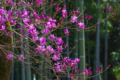 京王百草園201104-11