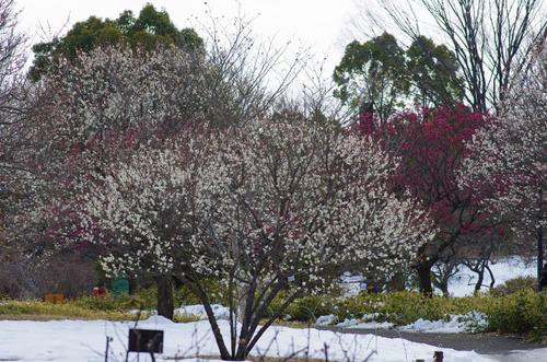 昭和記念公園201402-8