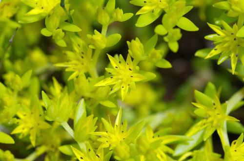 散歩道の花(5月)2012-8