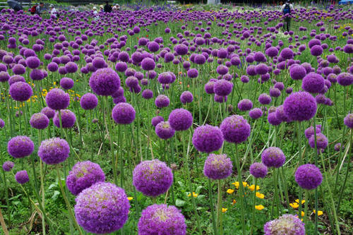 昭和記念公園201006-8