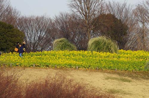 昭和記念公園201202-11